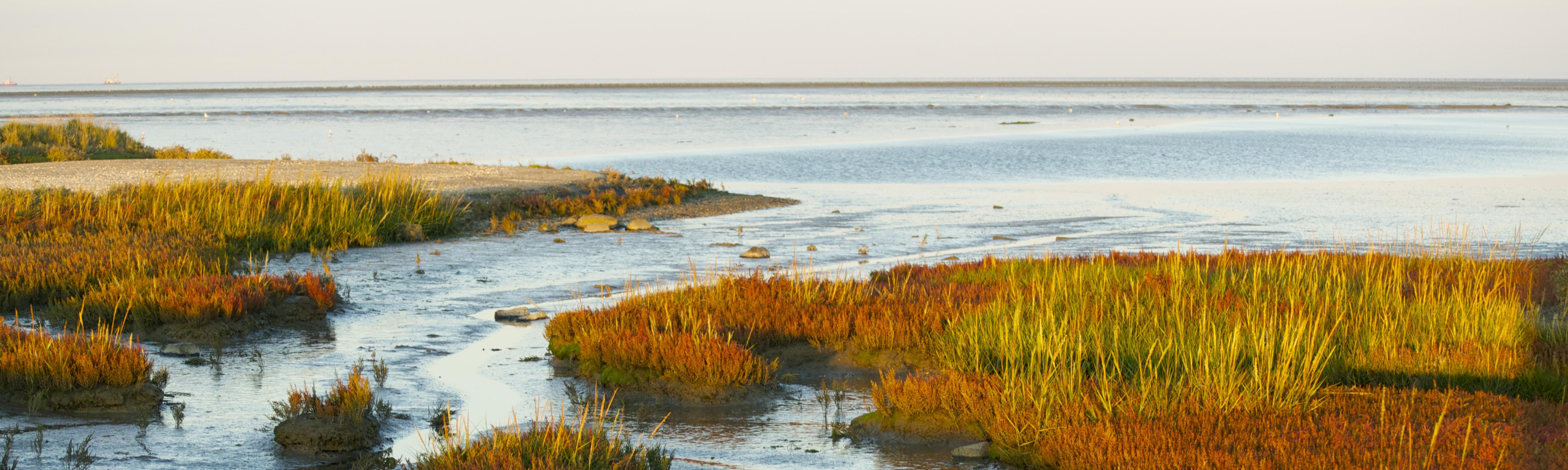 Laagstaande zonlicht Wadden Lauwersoog Lauwersmeer