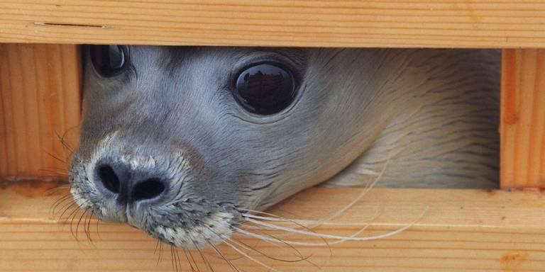 waddenzee zeehond